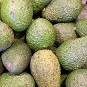 Avocado, the new enemy of the forests